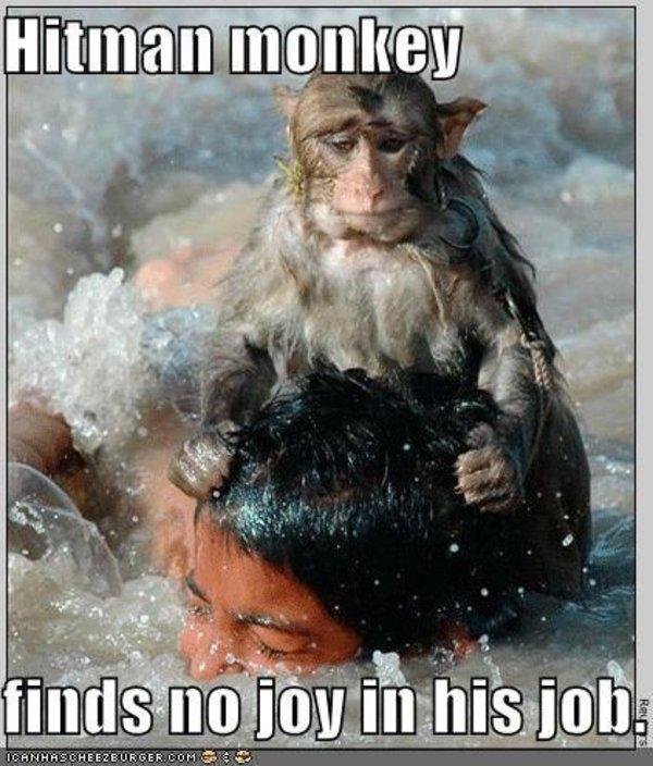 funny pictures hitman monkey drowns boy hitman monkey know your meme,Dead Monkey Meme