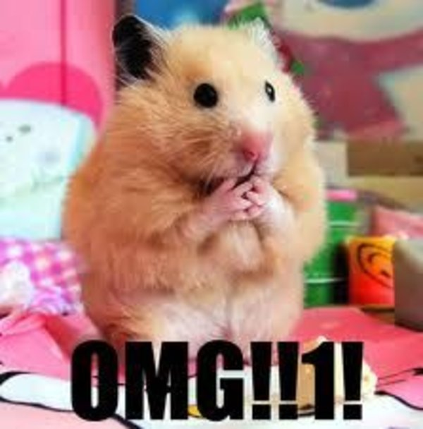 OMG Cat Meme Generator - Imgflip