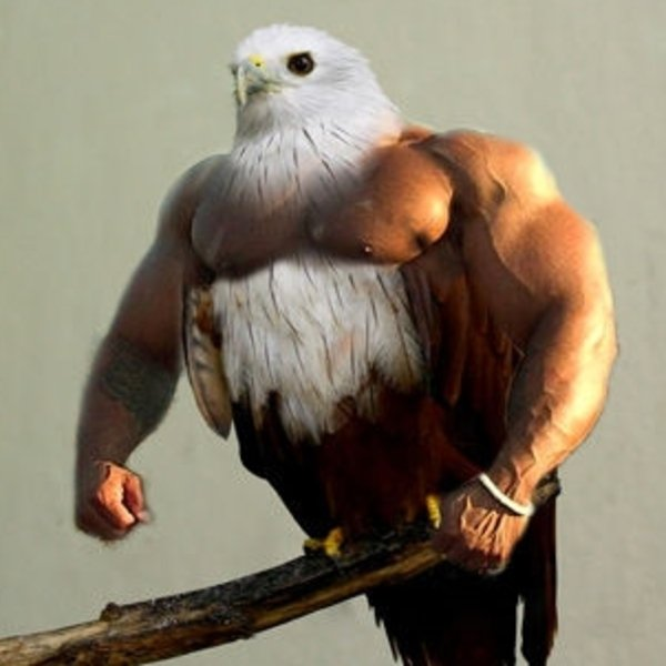 Birds with Arms | Know Your Meme