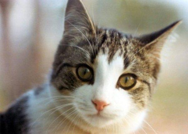 moshow the cat rapper