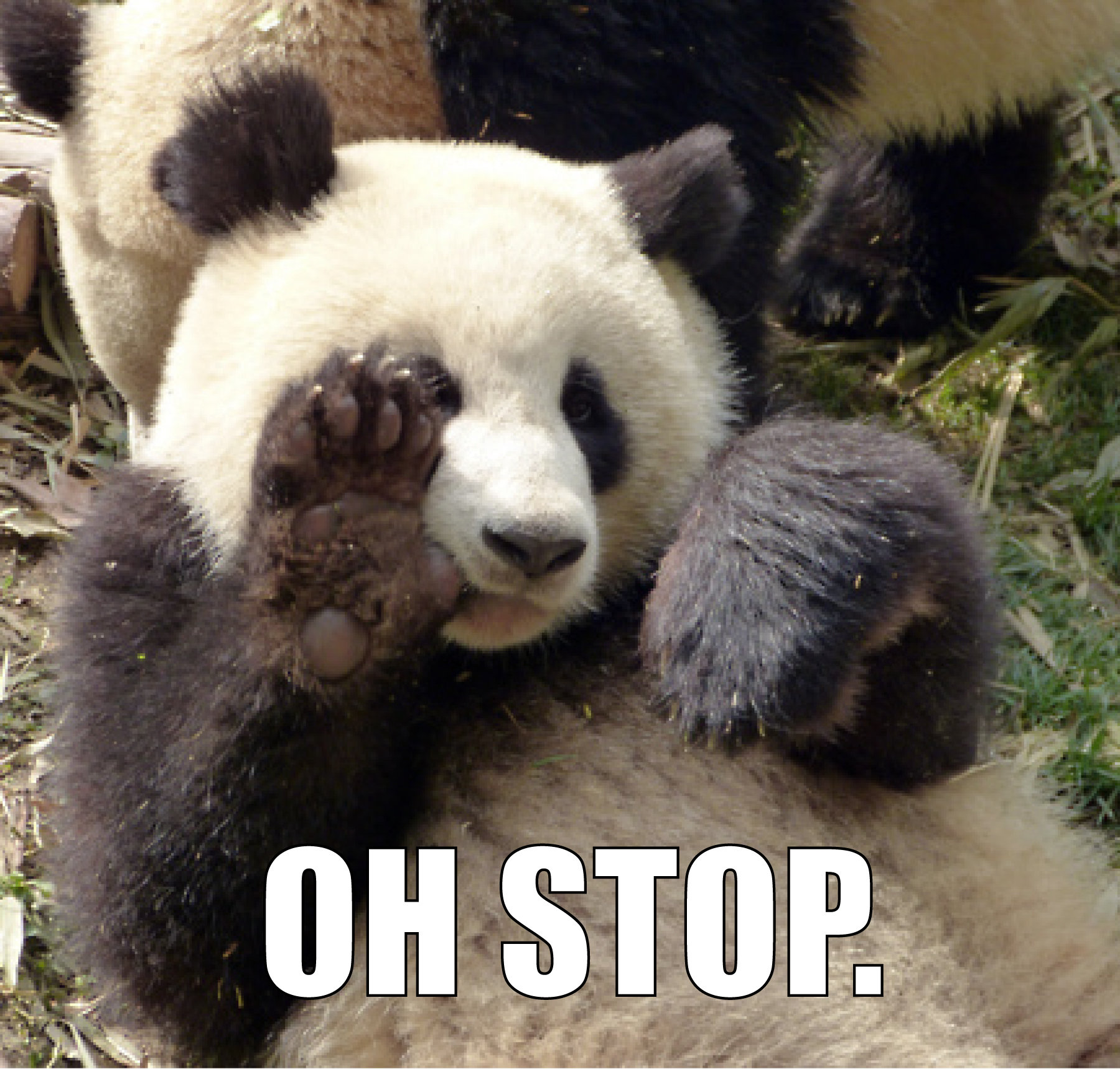 Oh stop panda know your meme voltagebd Image collections