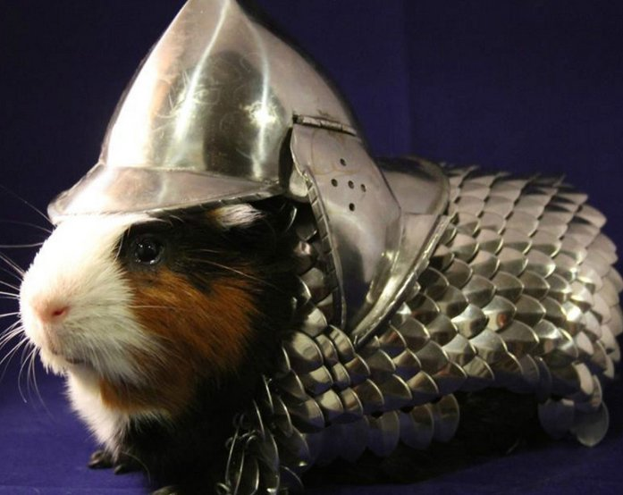 Cards Against Humanity Prongles >> Guinea Pig Armor Charity Auction | Know Your Meme
