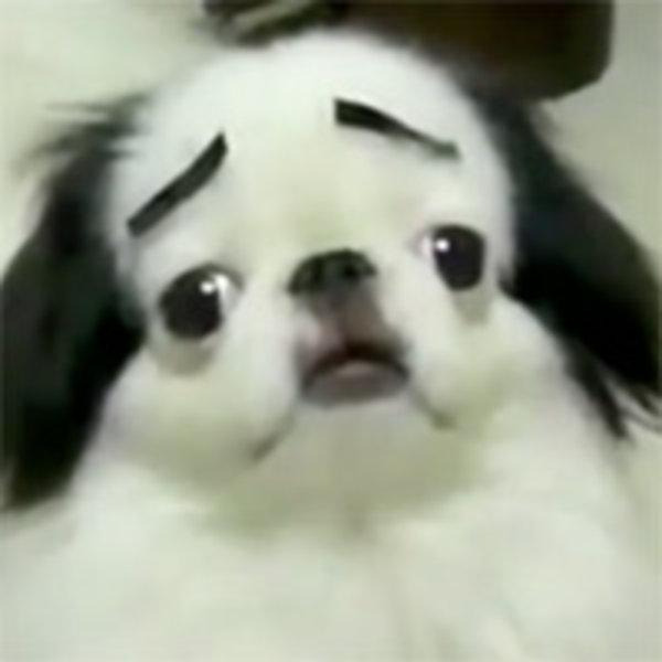 Big Dog Anime Meme