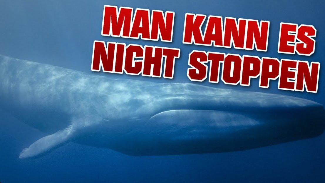 Blue Whale Challenge Know Your Meme