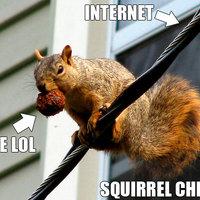 Squirrel Chew