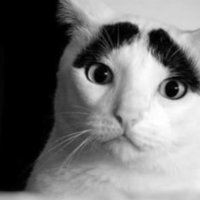 Eyebrow Cat (眉毛猫)