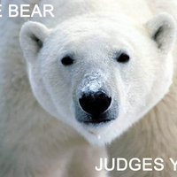 Ice Bear Judges You