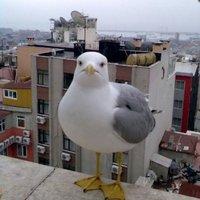 anti-meme/racist bird