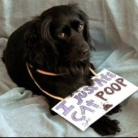 Dogshaming