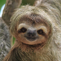 Sloths
