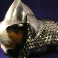 Guinea Pig Armor Charity Auction