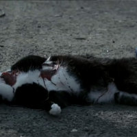Cat Killed On Love/Hate