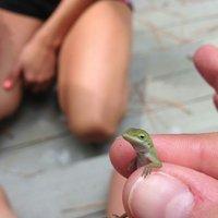 Unimpressed Lizard