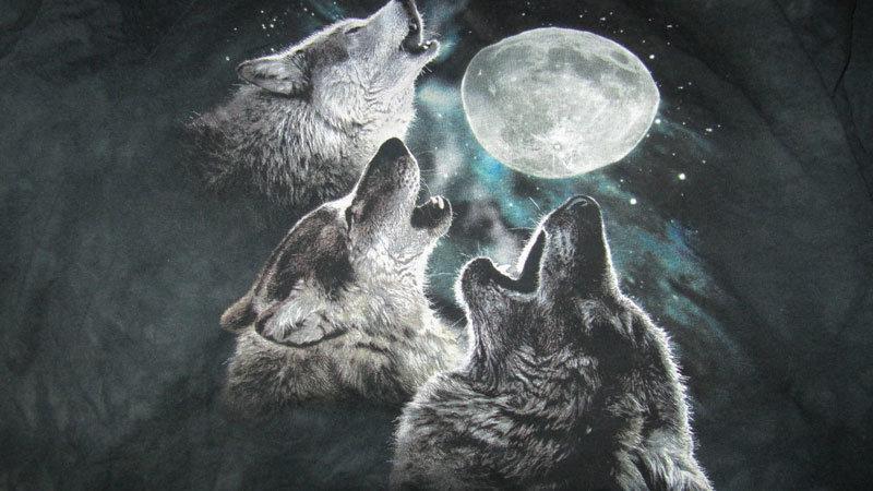 Resultado de imagen de wolf