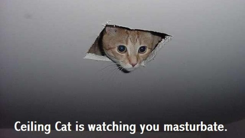 Ceiling cat know your meme mozeypictures Image collections