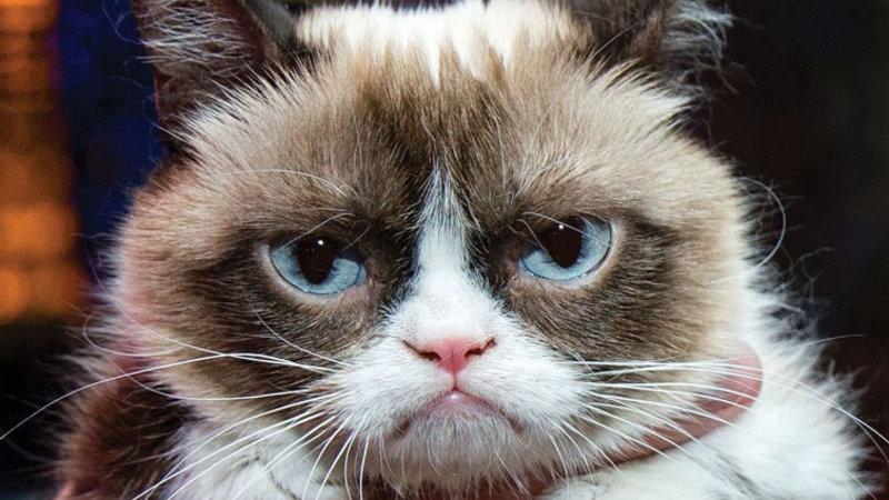 Грумпи кот