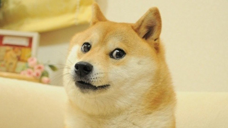 Image result for doge
