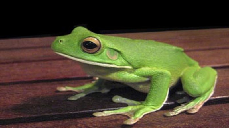frogs - Images Of Frogs