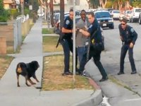 The Internet Reacts to Dog Shooting