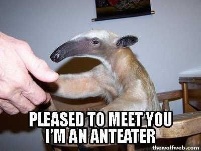 I m an Anteater