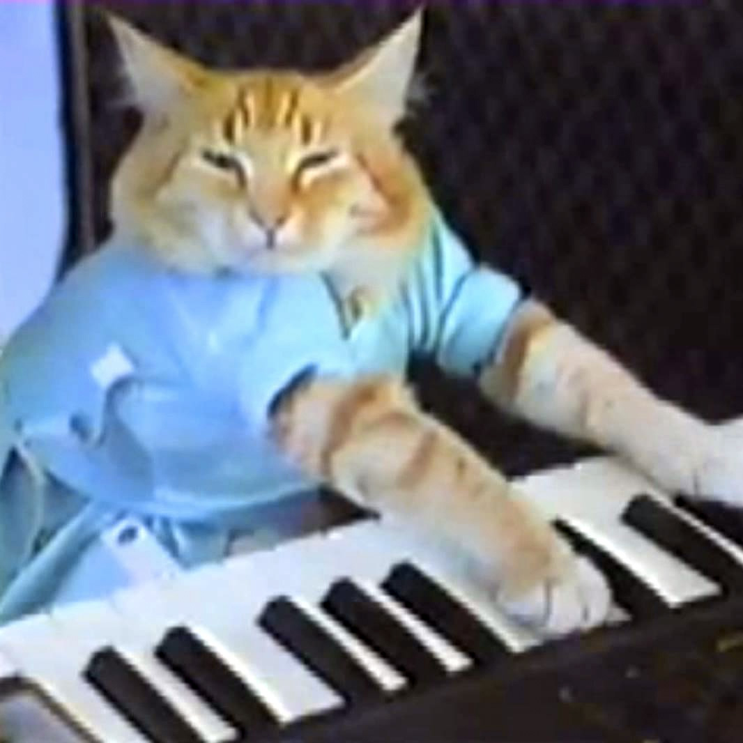 keyboar keyboard cat know your meme