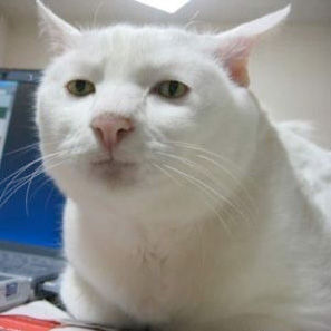 Image result for cat meme cry