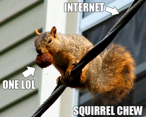 Squirrel Chew Know Your Meme