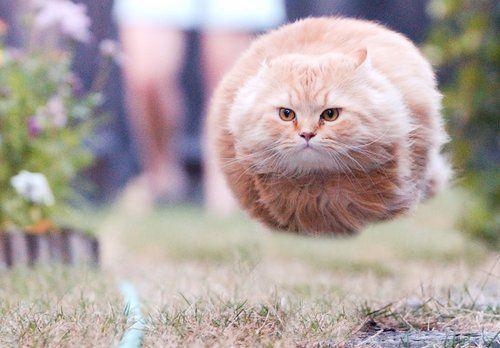 bullet_cat bullet cat know your meme