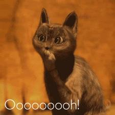 Ooooh Meme Cat