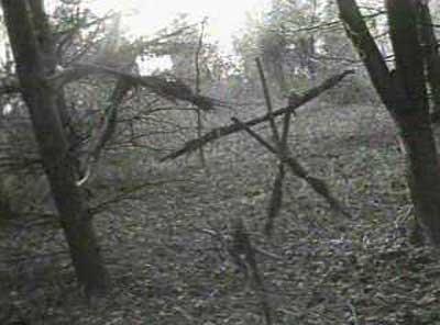 Výsledek obrázku pro Blair Witch forest