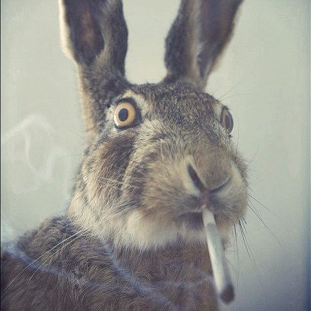 easterbunny420 easter 4 20 know your meme,Happy Birthday Easter Meme