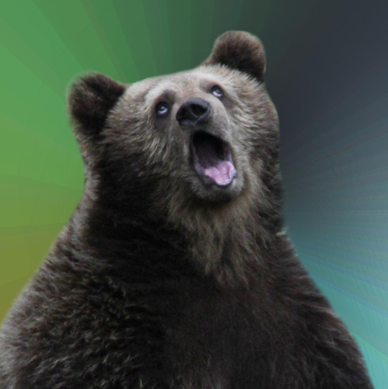 00000001 sarcastic bear know your meme