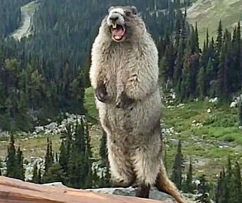animals that scream