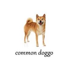example of common doggo