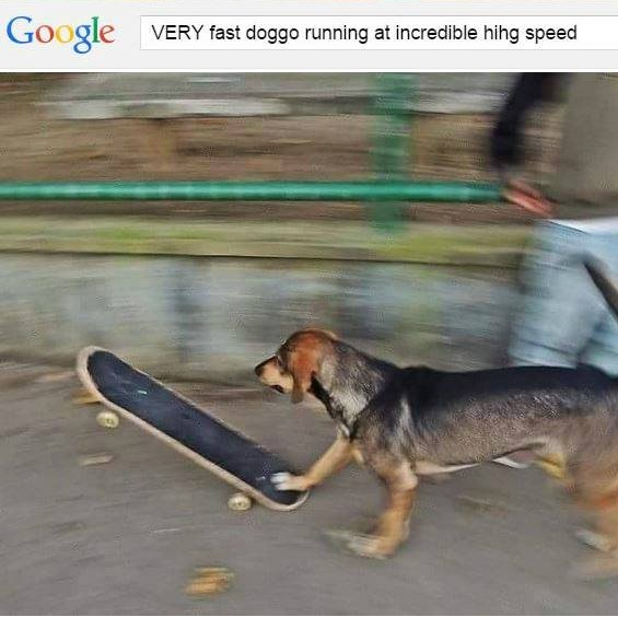 fastdoge very fast doggo running at incredible hihg speed know your meme