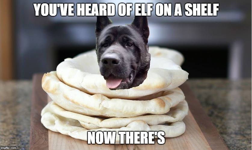 AkitaonaPita akita on a pita know your meme
