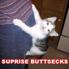 Surprise Buttsecks