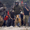 Riot Dog 