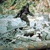 Bigfoot / Sasquatch