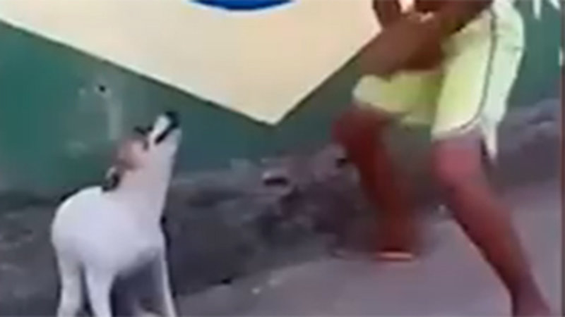 Dancing Brazilian Dog Inspires Remixes