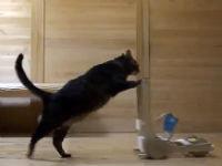 Meow Coming Through