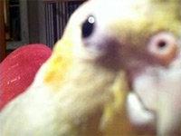 Bird Singing Dubstep