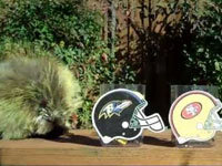 Porcupine Picks Super Bowl Winner