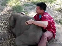 Baby Elephant Loves Cuddling