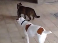 Cat Walks the Dog Home