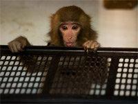 """IKEA Monkey's """"Custody"""" Trial Begins"""