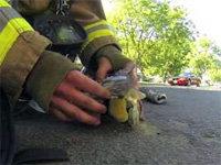Firefighter Rescues a Kitten