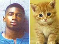 Kitten Kicker Charged with Animal Cruelty