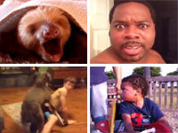 Best Vines of 2013