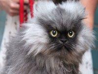 R.I.P. Colonel Meow